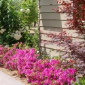 blue-oak-landscaping-residential-yard-chico