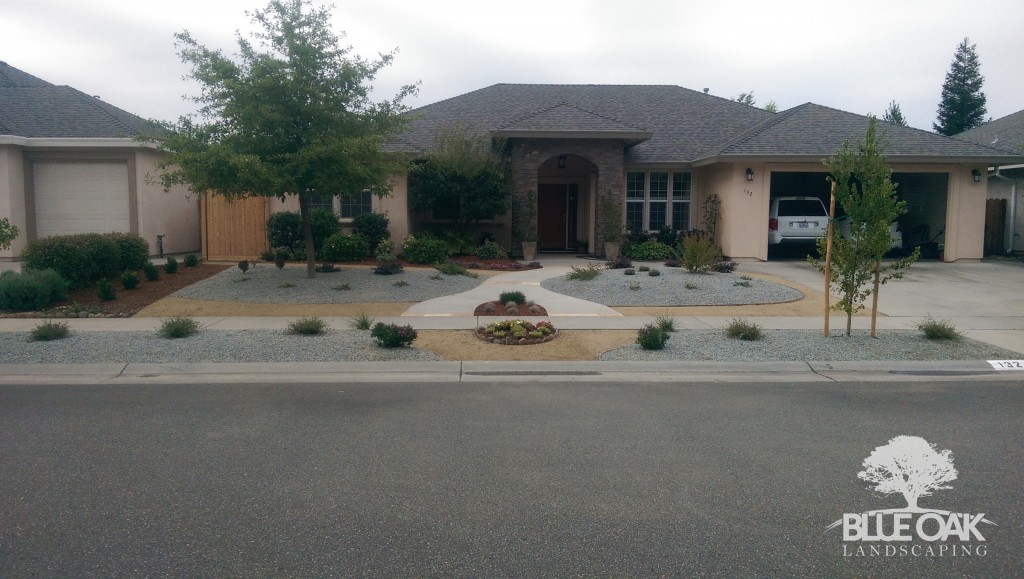 blue-oak-landscaping-chico-drought-tolerant-landscape-lawn-removal