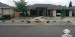 blue-oak-landscaping-chico-drought-tolerant-landscape-lawn-removal