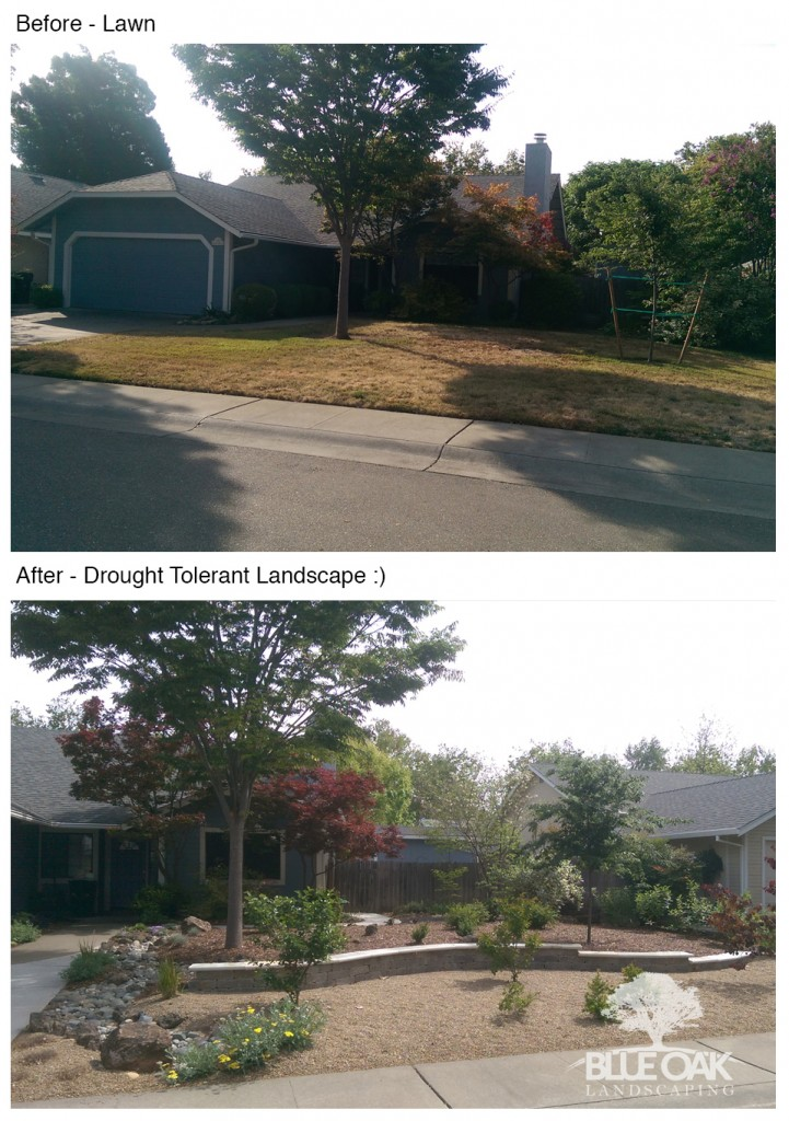 blue-oak-landscaping-chico-california-drought-tolerant-landscapes 4.08.14 PM
