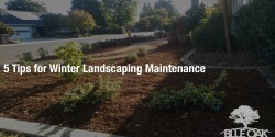 blue-oak-landscaping-chico-california-landscape-designs