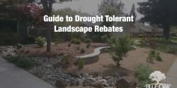 blue-oak-landscaping-landscape-design-drought-tolerant-lawn-replacement-chico-california